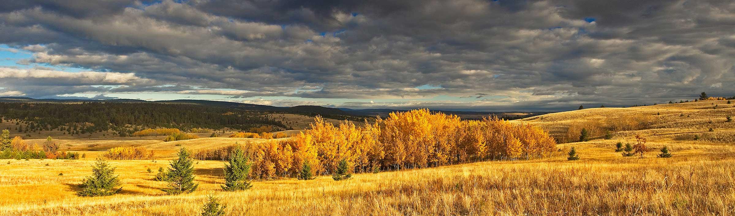 Grasslands Conservation Council of BC